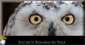 CHOUETTE LE ZOO DE LA BOISSIERE DU DORE présenté par Nanou Création traiteur antillais